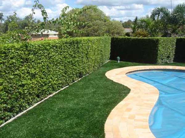 artificial grass for perths pools area's - all seasons synthetic